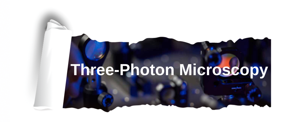Three Photon Microscopy